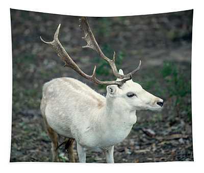 Buck Tapestry