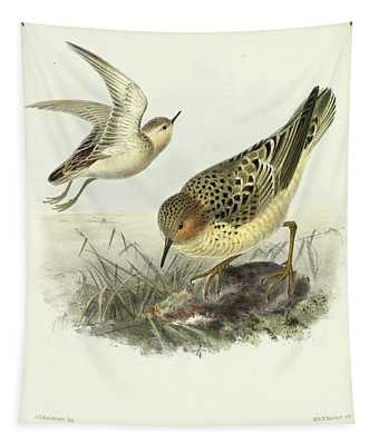 Buff-breasted Sandpiper Tapestry