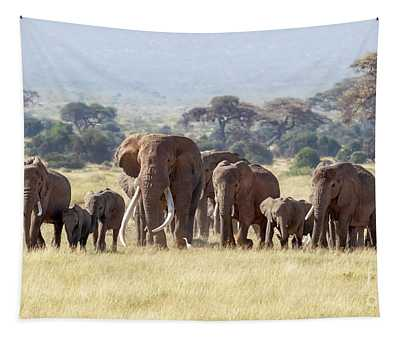 Bull Elephant With A Herd Of Females And Babies In Amboseli, Kenya Tapestry