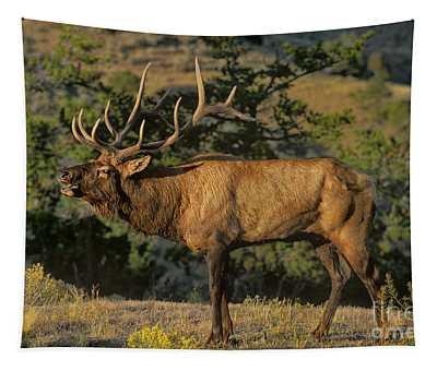 Bull Elk In Rut Bugling Yellowstone National Park Tapestry
