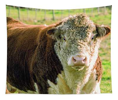 Bull In The Country Side Of Tasmania. Tapestry
