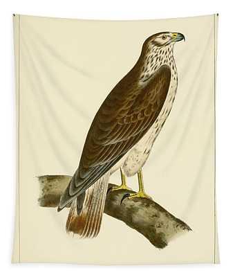 Buteo Cooperi Tapestry