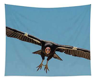 California Condor Gymnogyps Tapestry