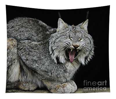 Canadian Lynx Tapestry