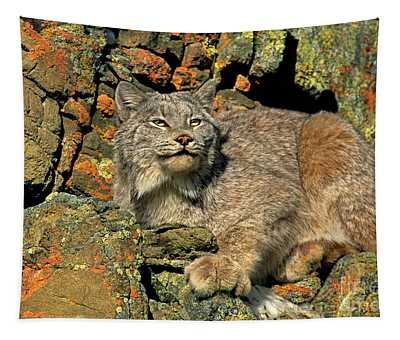 Canadian Lynx On Lichen-covered Cliff Endangered Species Tapestry
