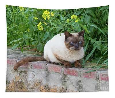 Cat On A Wall Tapestry