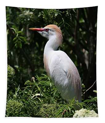 Cattle Egret With Breeding Feathers Tapestry