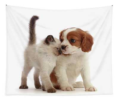 Cavalier And Kitten Head-to-head Tapestry