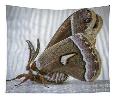 Cecropia Moth Tapestry