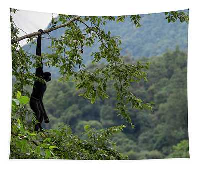 Central Yunnan Black Crested Gibbon, Alpha Male Hanging, China Tapestry