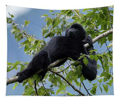 Central Yunnan Black Crested Gibbon, Alpha Male In Tree, China Tapestry