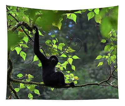 Central Yunnan Black Crested Gibbon, Male Sitting In Tree, China Tapestry