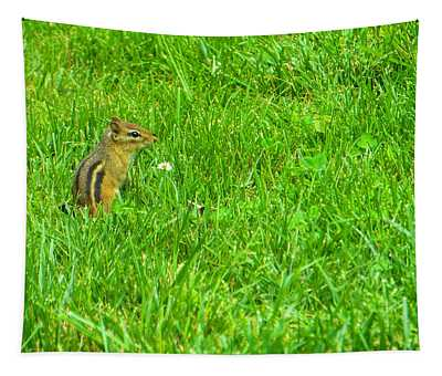 Chipmunk And The Flower Tapestry
