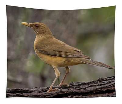 Clay-colored Thrush Tapestry
