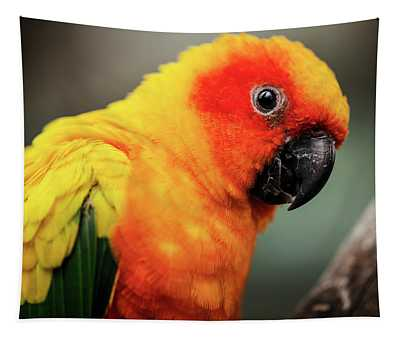 Close Up Of A Sun Conure Parrot. Tapestry