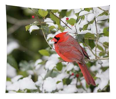Close-up Of Male Northern Cardinal Tapestry