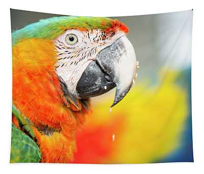 Close Up Of The Macaw Bird. Tapestry