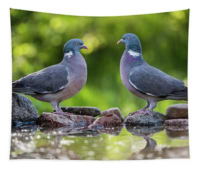 Common Wood Pigeons Meeting At The Waterhole Tapestry