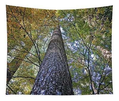 Cones In The Canopy Tapestry