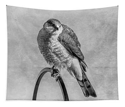 Coopers Hawk Tapestry