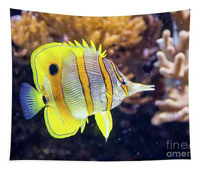 Copperband Butterfly Fish Tapestry