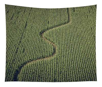 Tapestry featuring the photograph Corn Field by Steve Stanger