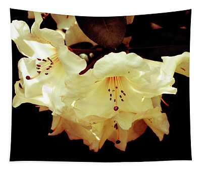 Creamy Rhododendron Tapestry