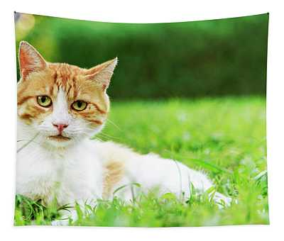 Cute Domestic Ginger Cat Relax In Outdoor Garden.  Tapestry