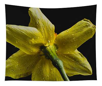 Daffodil And Water Drops Tapestry
