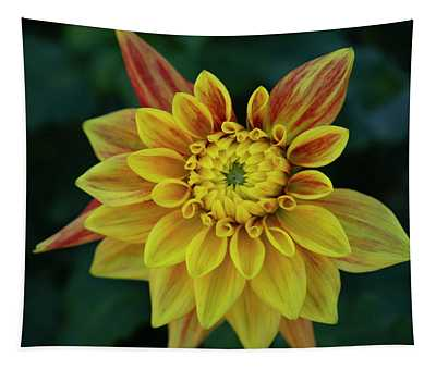 Dahlia Opening Tapestry