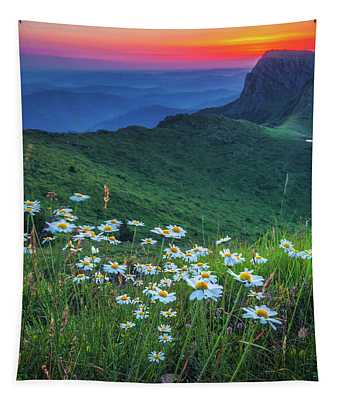 Daisies In The Mountain Tapestry