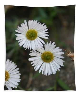 Daisy Daisy And Your White Petal Minding The Sun Core Tapestry