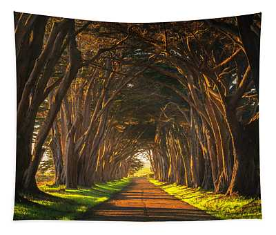 Dawn At The Cypress Tree Tunnel Tapestry