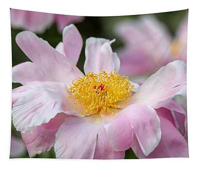 Delicate Pink Peony Tapestry