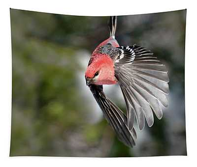 Diving Pine Grosbeak Tapestry