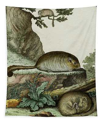 Dormice, 1780 Tinted Engraving By De Seve For 'histoire Naturelle...' By Comte De Buffon - 1 Tapestry