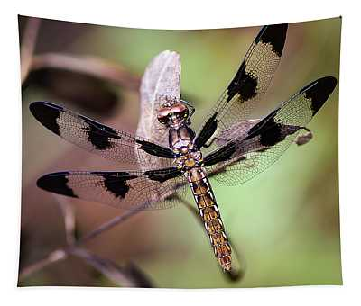 Dragon Fly, Insect, Northeast Texas, Grass, Pasture, Summer Tapestry