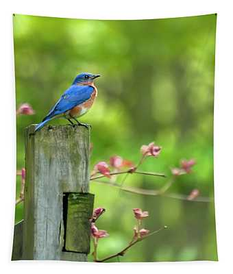 Bluebird Photographs Wall Tapestries