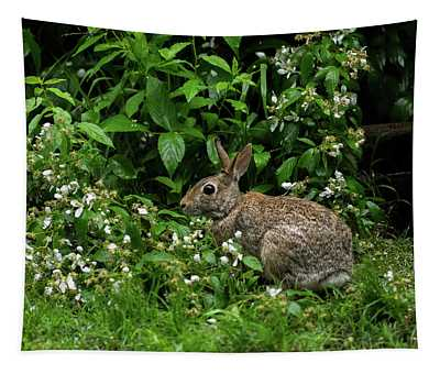 Eastern Cottontail - 3985 Tapestry