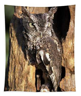 Eastern Screech Owl 92515 Tapestry