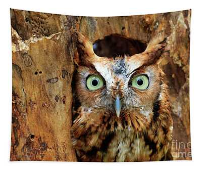 Eastern Screech Owl Perched In A Hole In A Tree Tapestry
