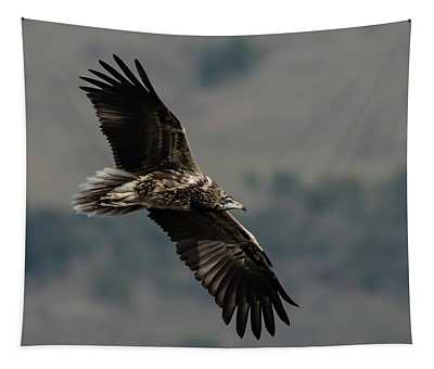 Egyptian Vulture, Sub-adult Tapestry