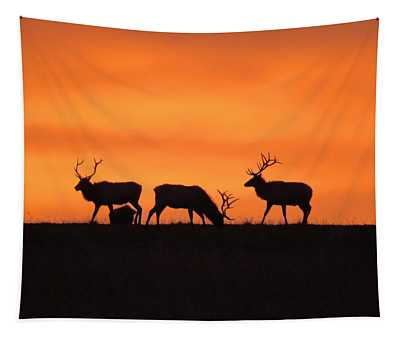 Elk In The Morning Light Tapestry