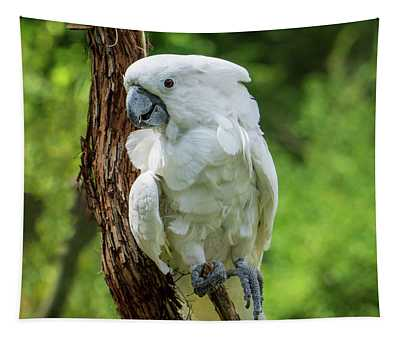 Endangered White Cockatoo Tapestry