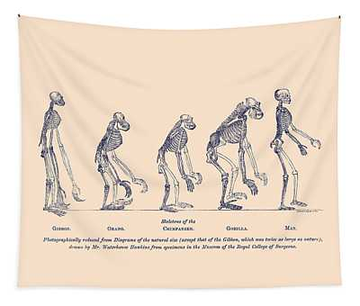 Comparative Anatomy Wall Tapestries