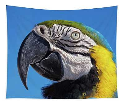 Eye Contact - Colorful Parrot's Head Tapestry