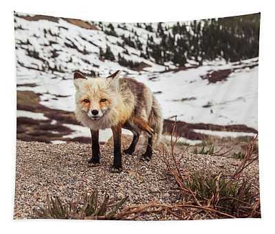 Eye To Eye With A Fox At Loveland Pass Tapestry