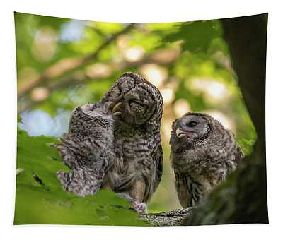 Feeding The Owlets Tapestry