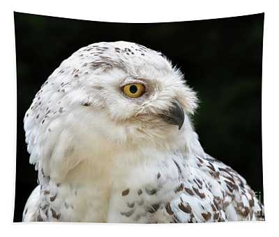 Female Snowy Owl Close Up Tapestry