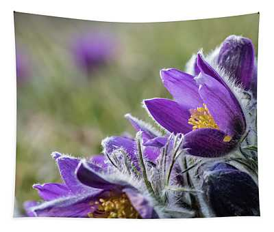 Flowering Anemone Pulsatilla Tapestry